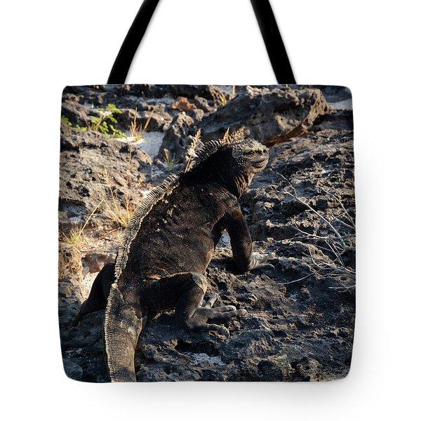 Marine Iguana, Amblyrhynchus Cristatus Tote Bag