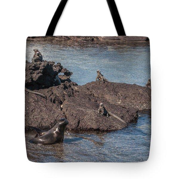 Marine Iguanas And Sealion Pup At Punta Espinoza Fernandina Island Galapagos Islands Tote Bag