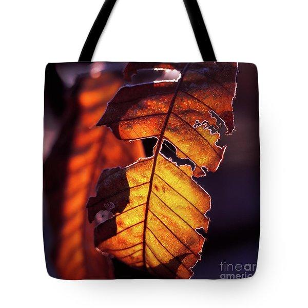 Maron Tote Bag