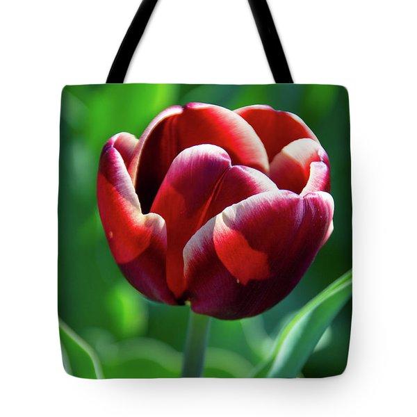 Maroon Tulip Tote Bag