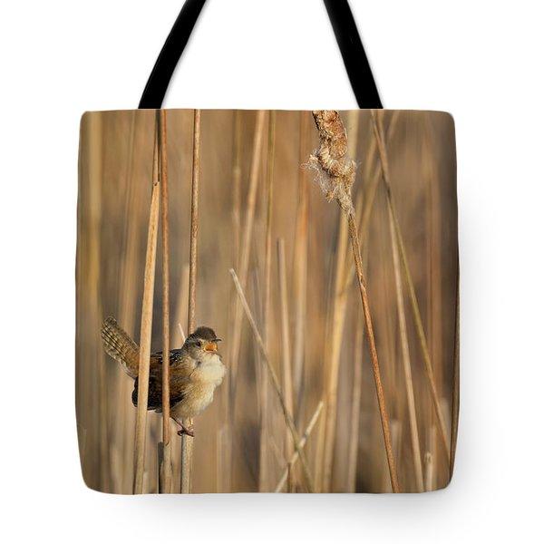 Marsh Wren Tote Bag