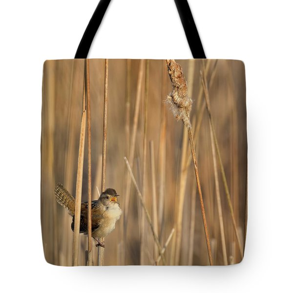 Marsh Wren Square Tote Bag by Bill Wakeley