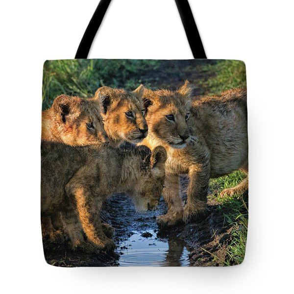 Masai Mara Lion Cubs Tote Bag by Karen Lewis