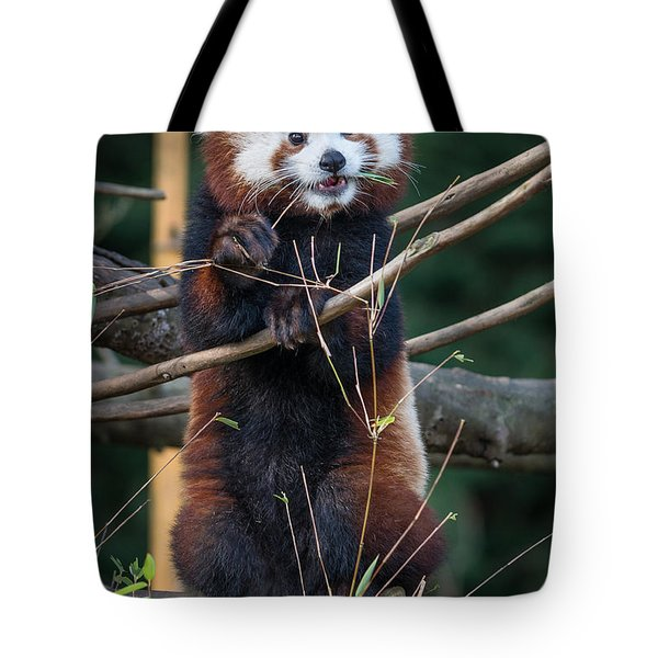 Masala The Curious Tote Bag