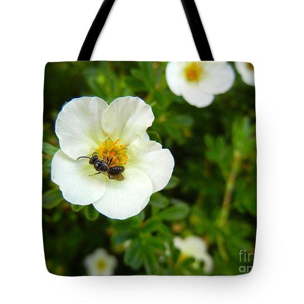 Massachusetts Carpenter Bee Tote Bag