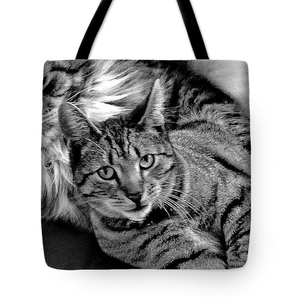 Tote Bag featuring the photograph Master And Apprentice by Roger Bester
