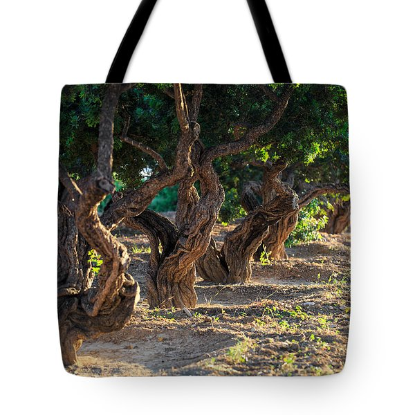Mastic Tree   Tote Bag