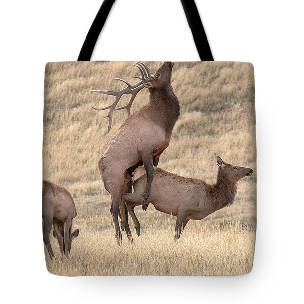 Mating  Tote Bag by Kelly Marquardt