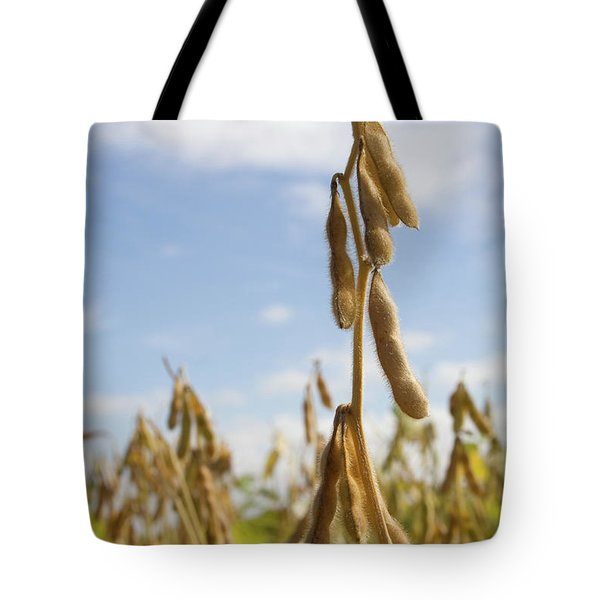 Tote Bag featuring the photograph Maturing Soybeans by Dylan Punke