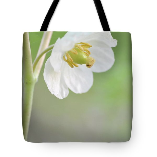 Mayapple Flower Tote Bag