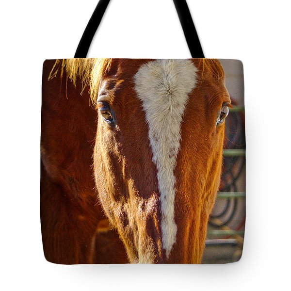 Mccool, Grandson Of Secretariat Tote Bag
