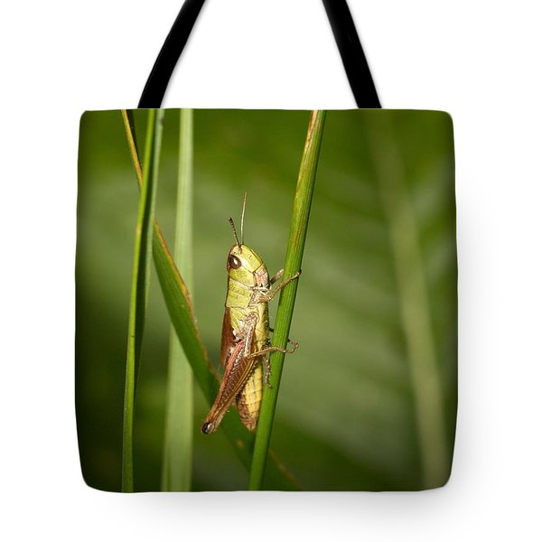 Tote Bag featuring the photograph Meadow Grasshopper by Jouko Lehto