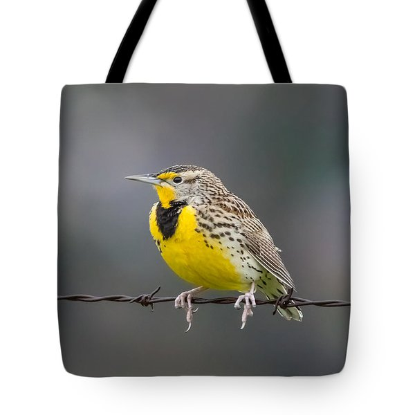 Meadowlark On Barbed Wire Tote Bag