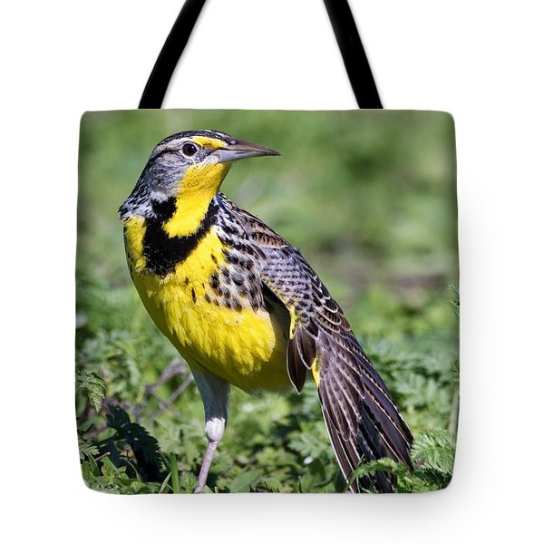 Meadowlark On The Runway Tote Bag
