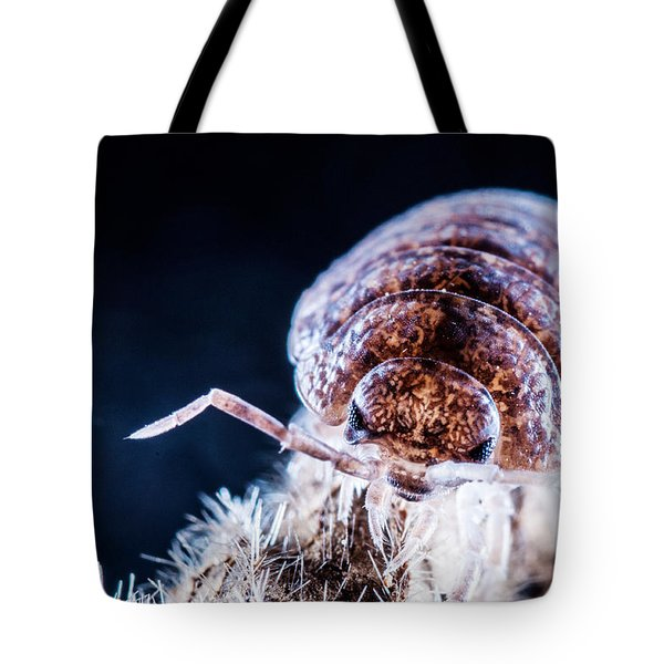 Mean Looking Tote Bag