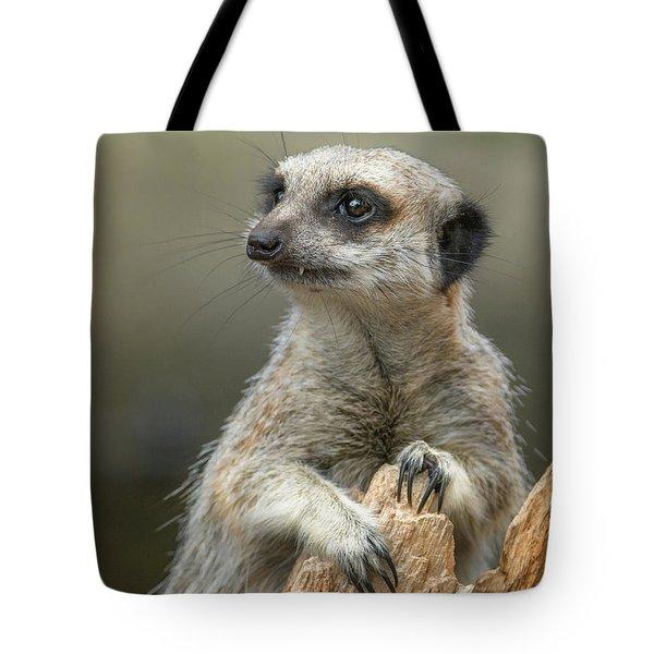 Meerkat Model Tote Bag
