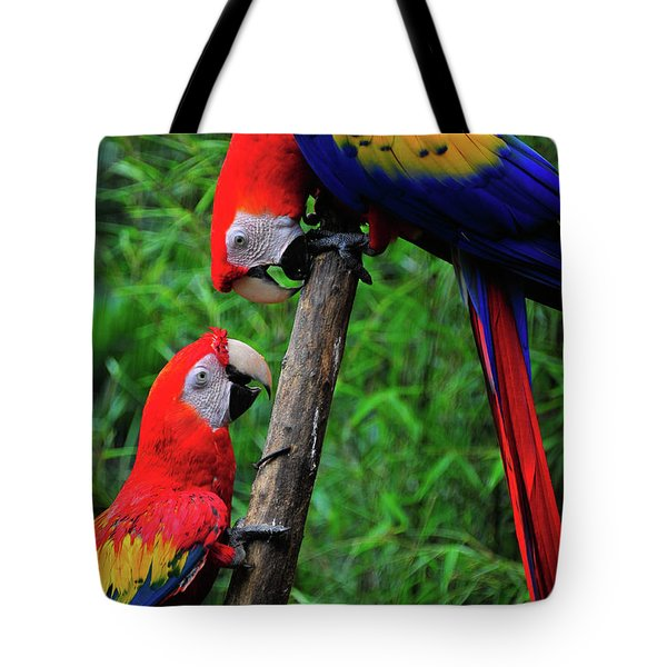 Meeting Of The Macaws  Tote Bag by Harry Spitz