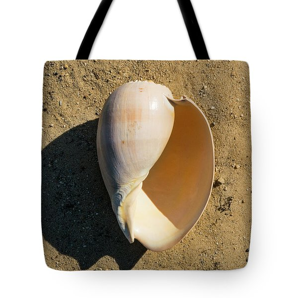 Tote Bag featuring the photograph Melon Shell Voluta Aethiopica by Frank Wilson