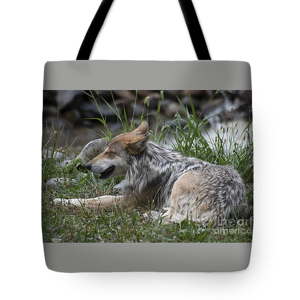 Mexican Wolf 20120714_112a Tote Bag by Tina Hopkins