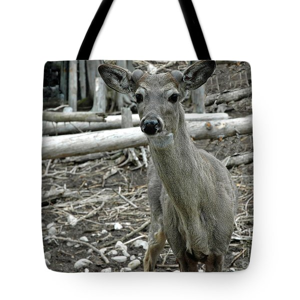 Tote Bag featuring the photograph Michigan White Tail Deer by LeeAnn McLaneGoetz McLaneGoetzStudioLLCcom