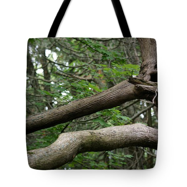 Tote Bag featuring the photograph Michigan Woods 2 by Linda Shafer