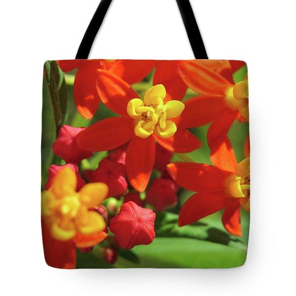 Milkweed Flowers Tote Bag by Melinda Saminski