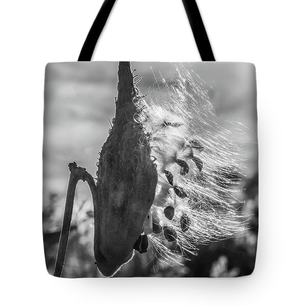 Milkweed Pod Back Lit B And W Tote Bag