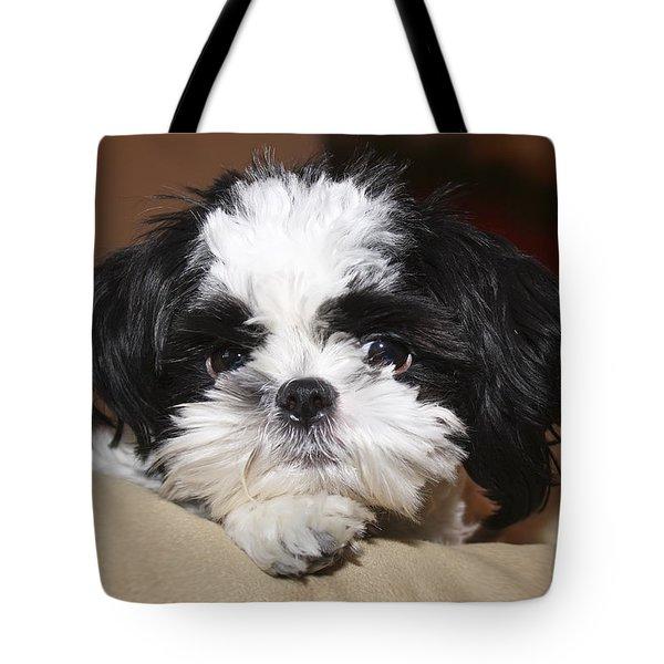 Milo Tote Bag by Teresa Zieba