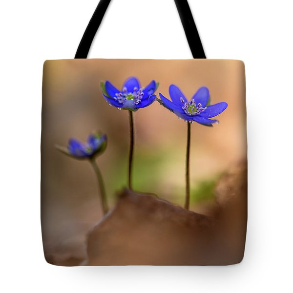 Tote Bag featuring the photograph Minimalistic Impresion With Liverworts by Jaroslaw Blaminsky