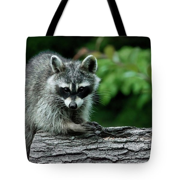 Mischievous Tote Bag by Linda Segerson