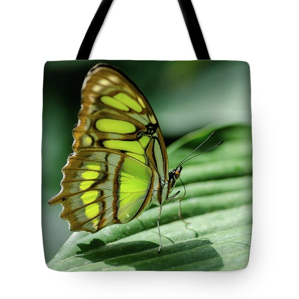 Miss Green Tote Bag by Nick Boren
