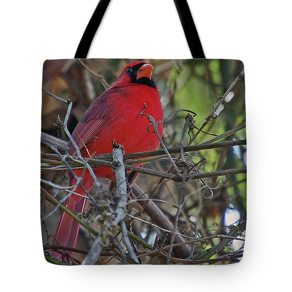 Mister Cardinal Tote Bag by DigiArt Diaries by Vicky B Fuller