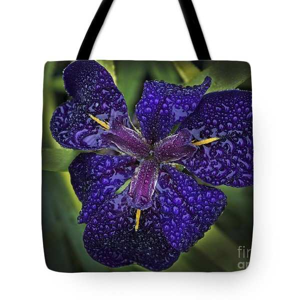 Tote Bag featuring the photograph Misty Iris by Inge Riis McDonald