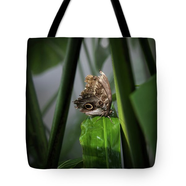 Tote Bag featuring the photograph Misty Morning Owl by Karen Wiles