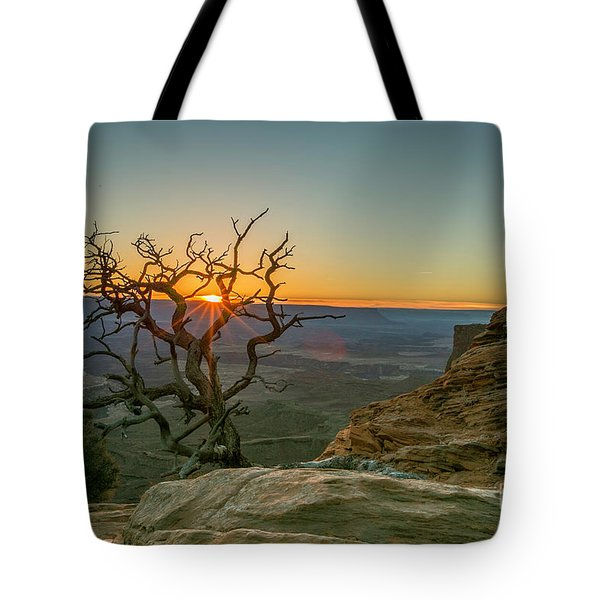 Moab Tree Tote Bag
