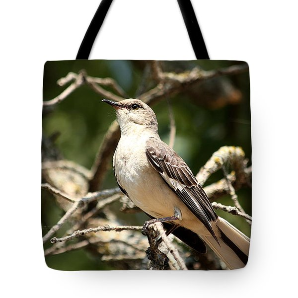 Tote Bag featuring the photograph Mockingbird  by Sheila Brown