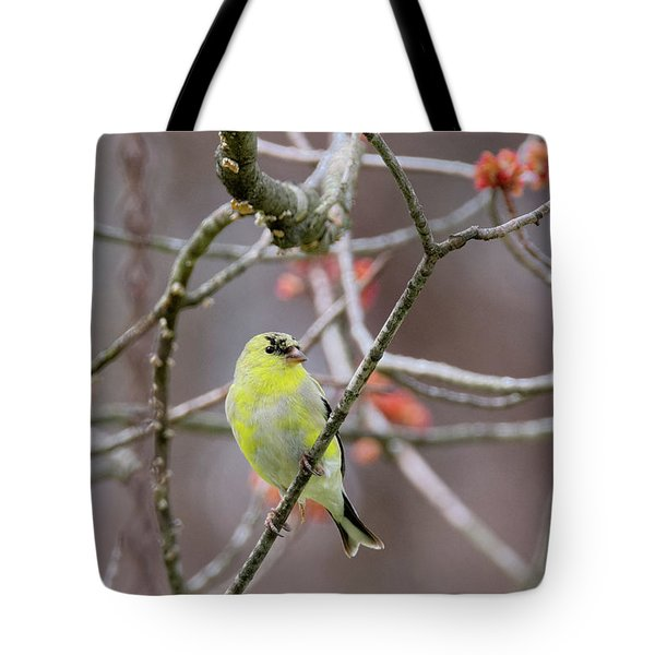 Tote Bag featuring the photograph Molting Gold Finch by Bill Wakeley