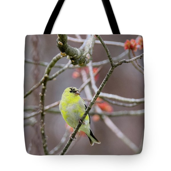 Tote Bag featuring the photograph Molting Gold Finch Square by Bill Wakeley
