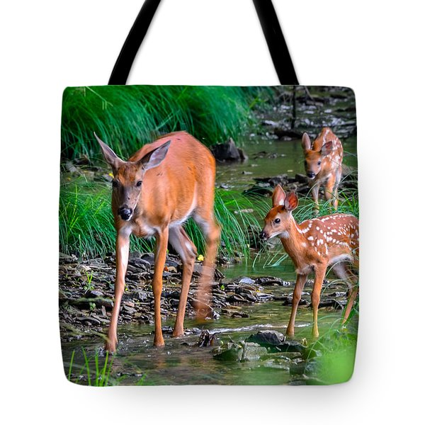 Tote Bag featuring the photograph Mom And Fawns 2 by Brian Stevens