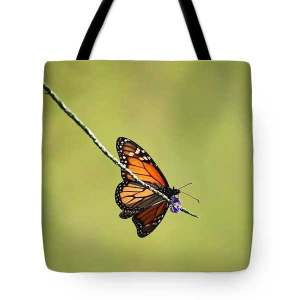 Monarch And Natural Green Canvas Tote Bag by Carol Groenen