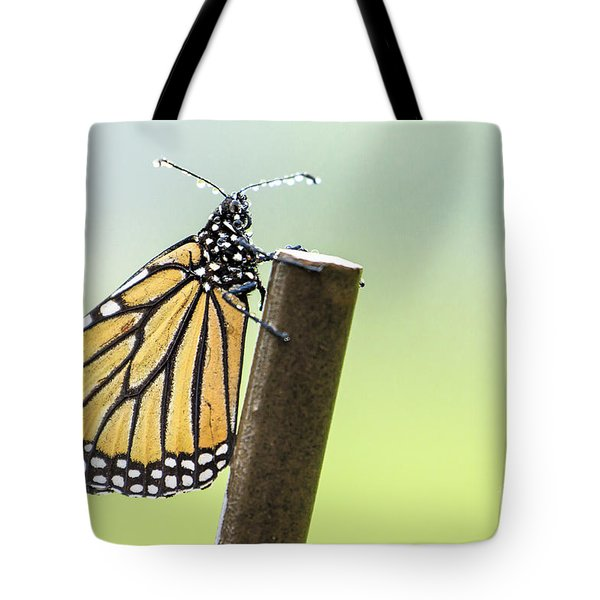 Monarch Butterfly In Rain Tote Bag
