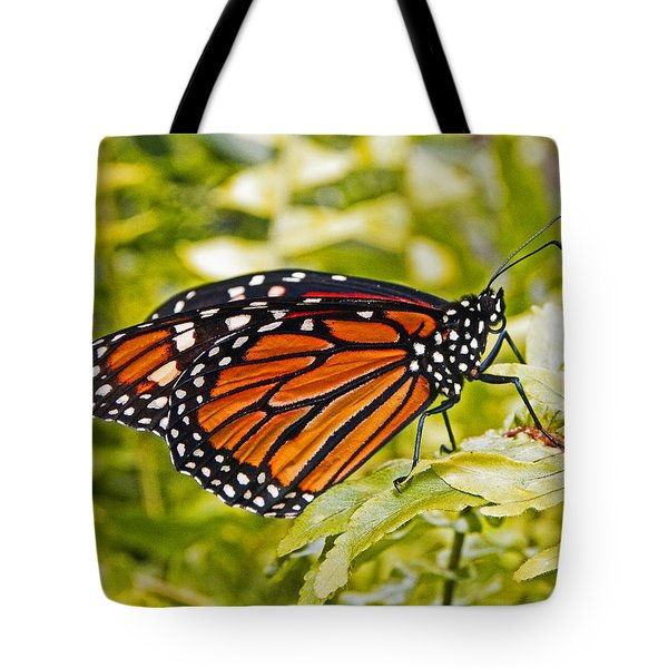 Tote Bag featuring the pyrography Monarch Butterfly by Terri Mills