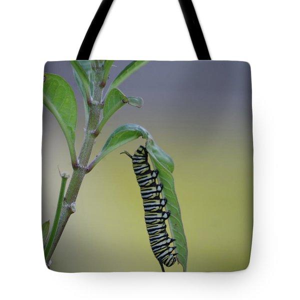 Monarch Caterpillar Feeding Tote Bag