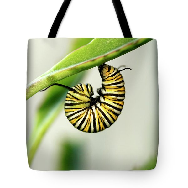 Monarch Caterpillar On Succulent Plant Photo Tote Bag