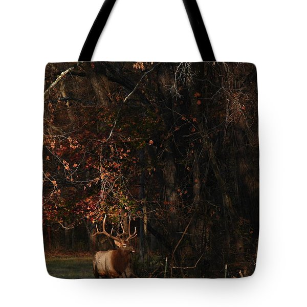 Tote Bag featuring the photograph Monarch Joins The Rut by Michael Dougherty
