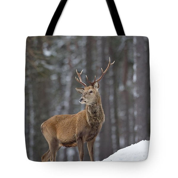 Monarch Of The Woods Tote Bag