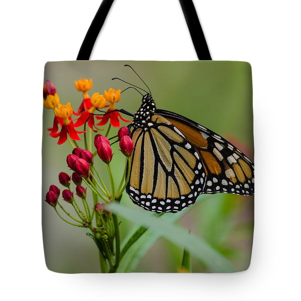 Monarch On Butterfly Weed Tote Bag