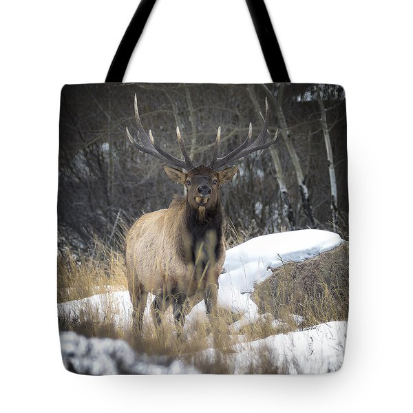 Monarch Of The Front Range Tote Bag