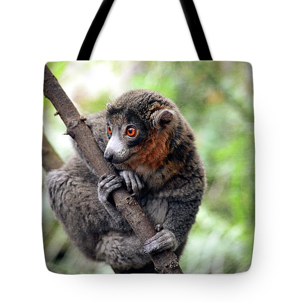 Mongoose Lemur On A Tree  Tote Bag