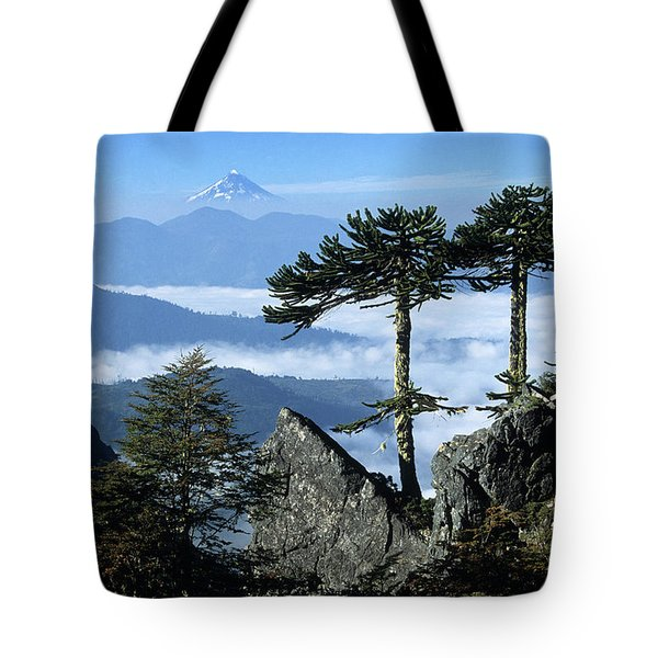 Monkey Puzzle Trees In Huerquehue National Park Tote Bag by James Brunker